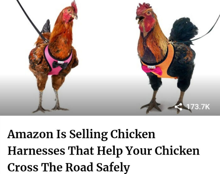 A Leash For Your Chicken