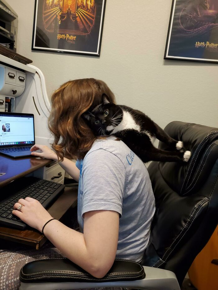 I Have The World's Clingiest Cat. He Loves To Be Picked Up, Kissed, Held And He Loves Taking Naps On My Lap. This Is What Happens When I'm Trying To Work