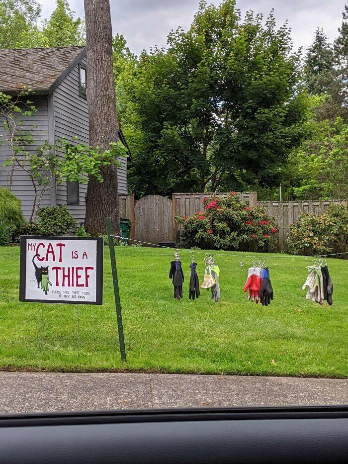 The Cat Burglar Has Struck Again!