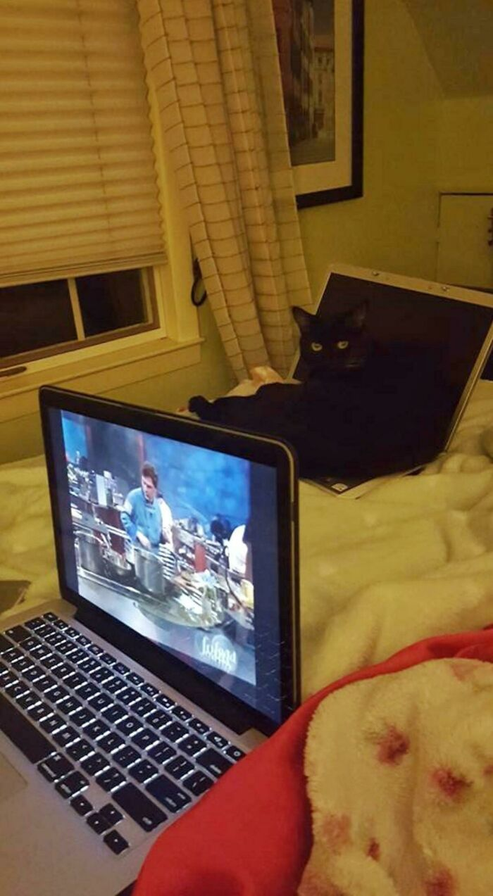 When You Have To Give Your Cat A Decoy Laptop