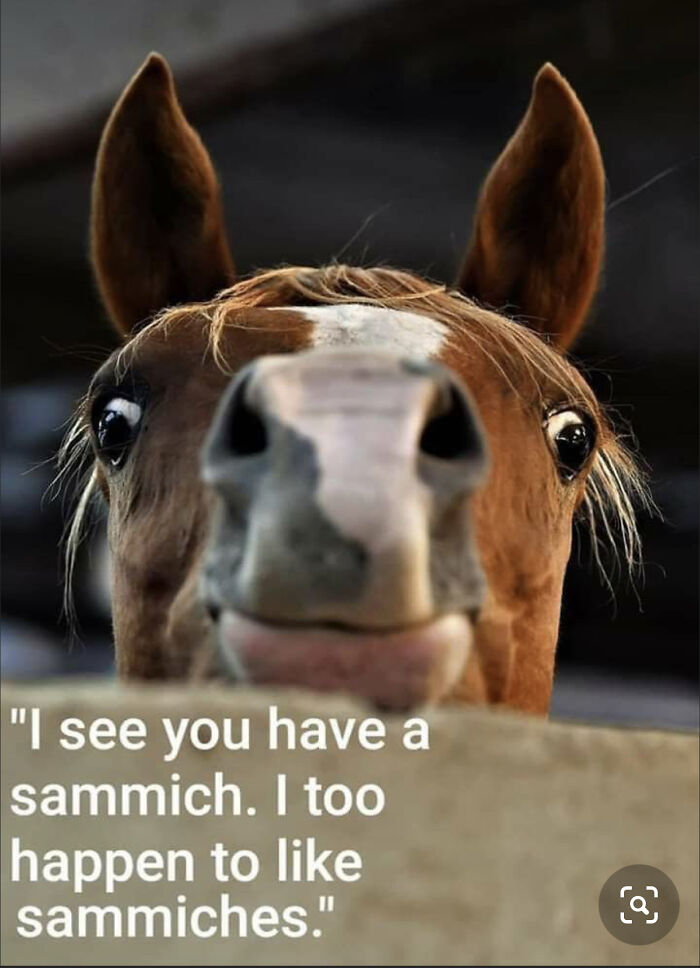 Sammich Horse