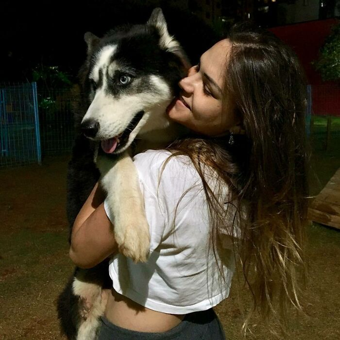 Owners Exploited This Husky Until She Could No Longer Walk And Produce Puppies - This Woman Gave Her A Second Chance In Life