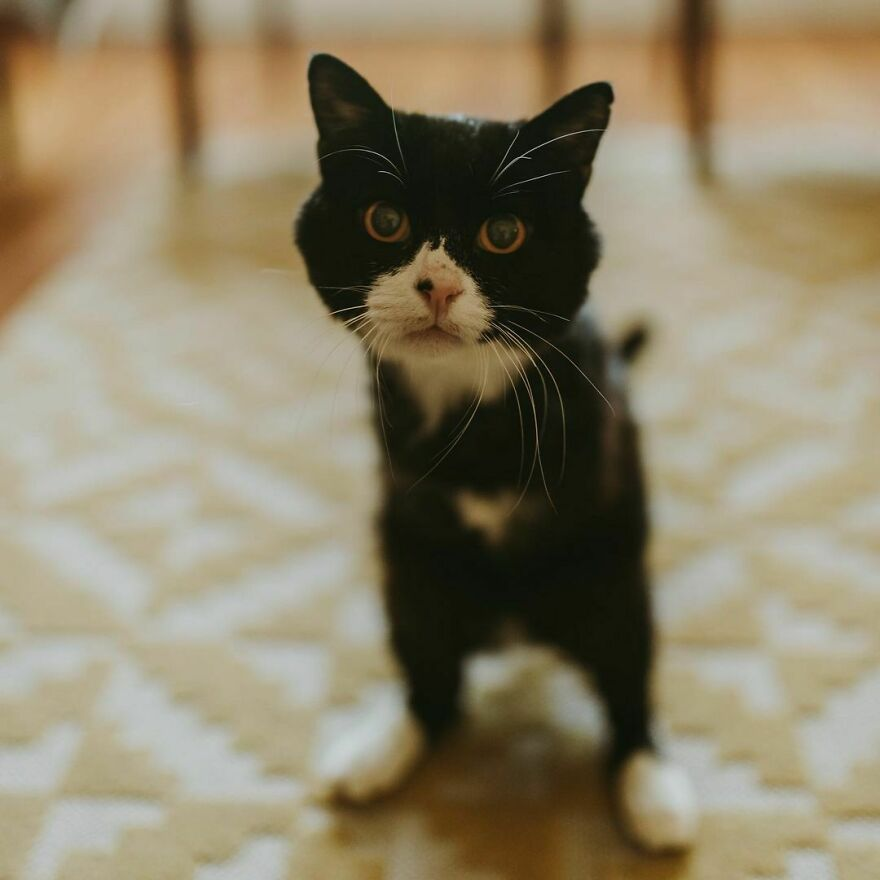 Cat Owner Sets Up An Instagram Account For Her Two-Legged Cat And Shares Her Cat's Inspiring Rehabilitation Story