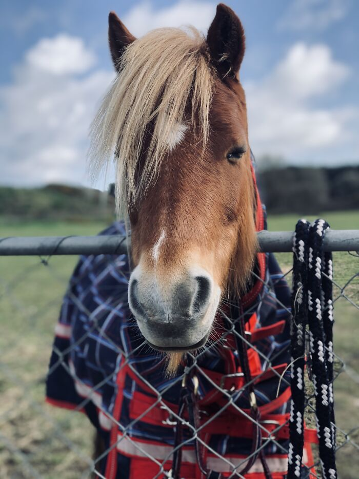 I Was Able To Get My Pony To Not Bite Me For This Photo
