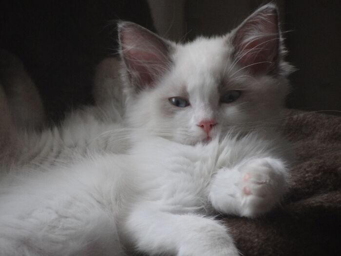 Izzy Kitten