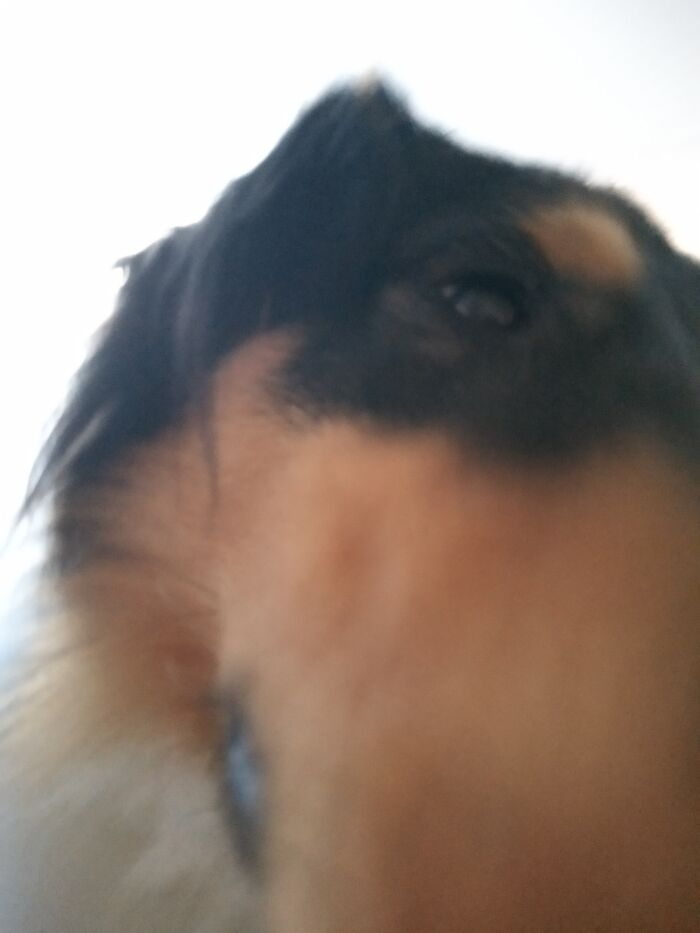 Sniffing The Camera