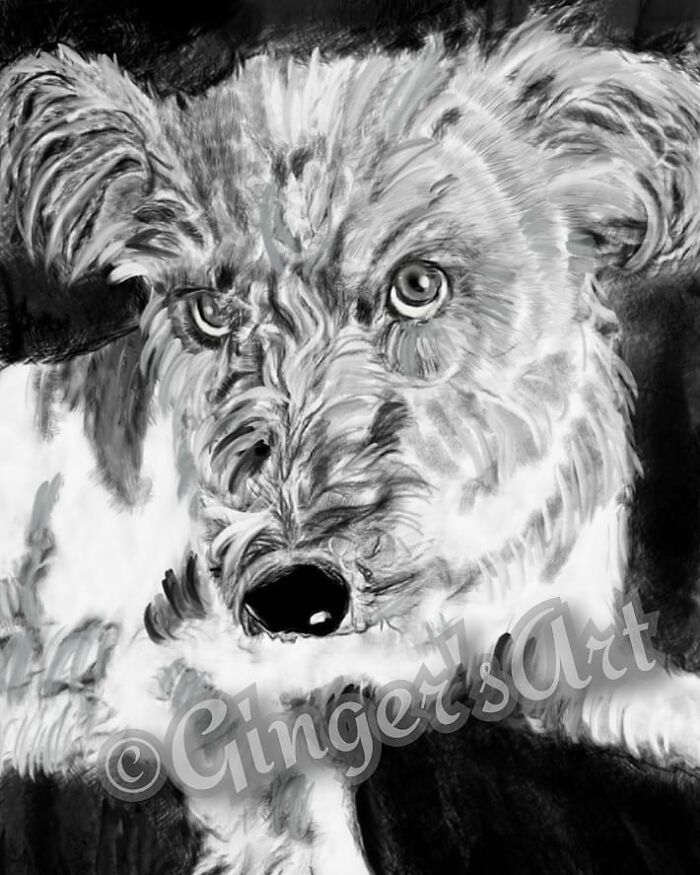 Pencil Drawing I Made Of My Dog Tido