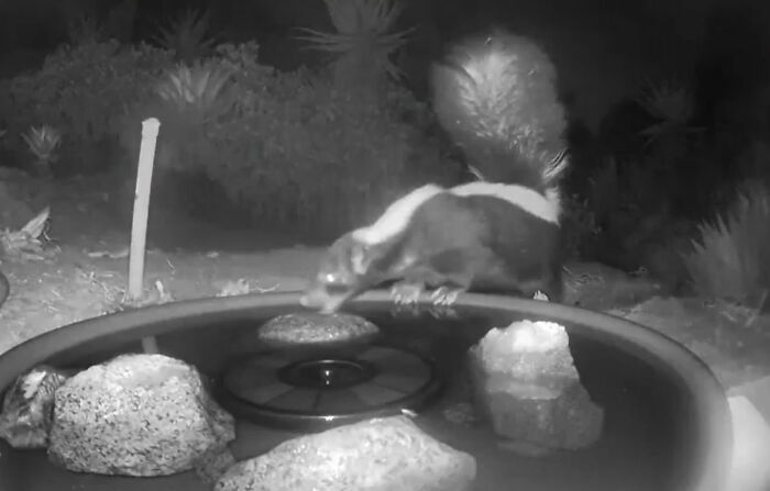 Woman Put A Water Fountain With A Camera In Her Yard, Here Are 30 Photos Of Regular Visitors