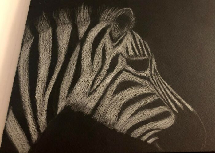 Baby Zebra--My First Attempt At Drawing In Almost 25 Years