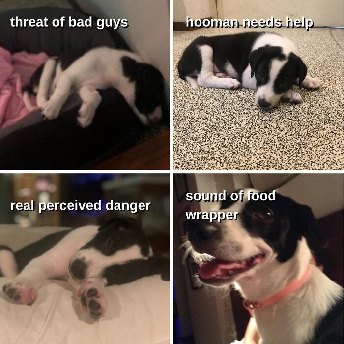 A Meme I Made Of My Doggo