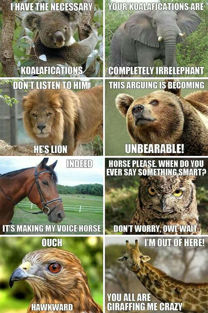 My Favorite Animal Meme