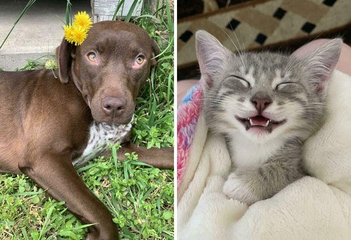 30 Fotos de las adopciones de mascotas más reconfortantes del mes de Mayo