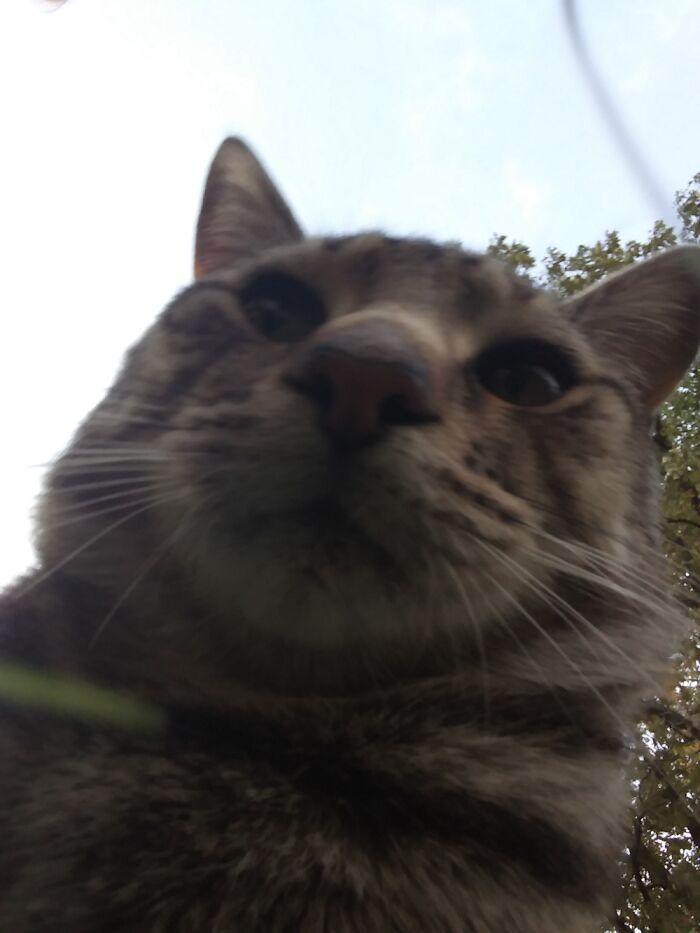 Gotta Love The Dopey Cat