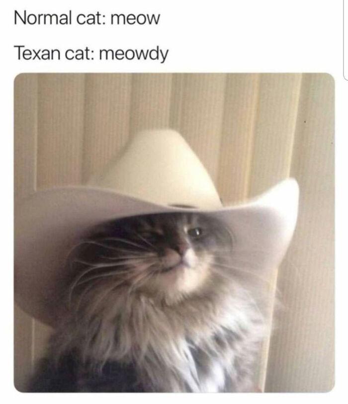 Meowdy Y'all