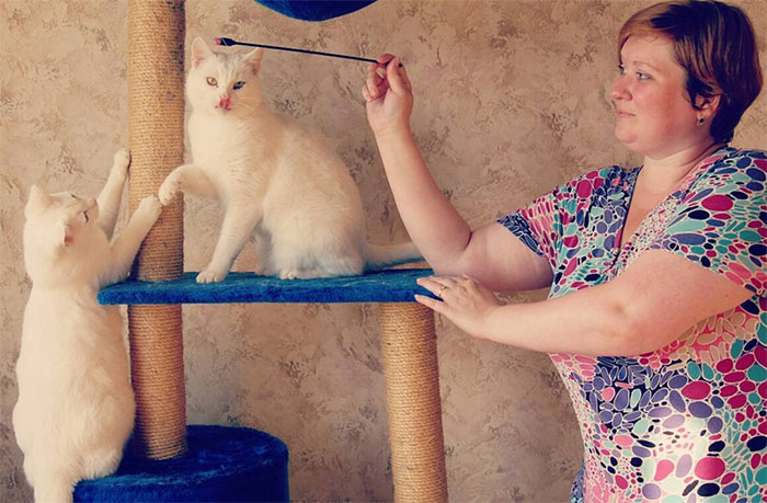 Cat Psychologist Busts 13 Myths About Cats And All Cat Owners Should Know Why These Myths Are Wrong