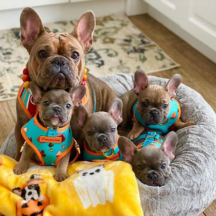 Rowena con sus bebés Roz, Harvey, Pru y Brina