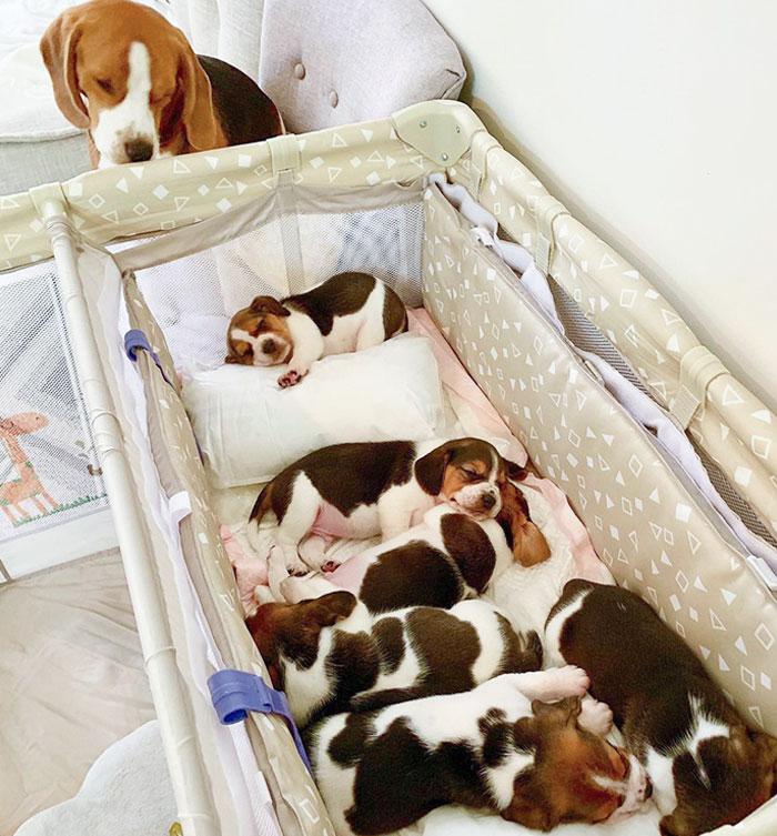 Cuidando a los recién nacidos