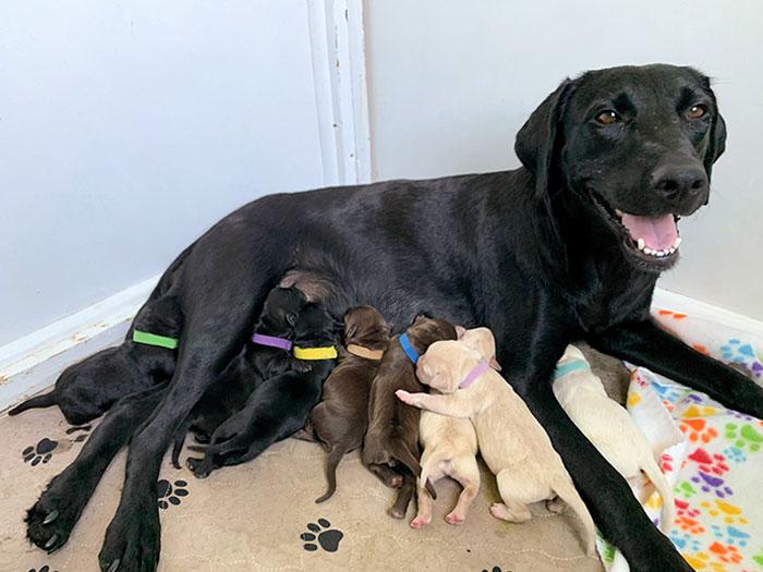 Ellie, una perrita de acogida, tuvo a sus bebés ayer, y al parecer vino con todo un set de muestras de laboratorio