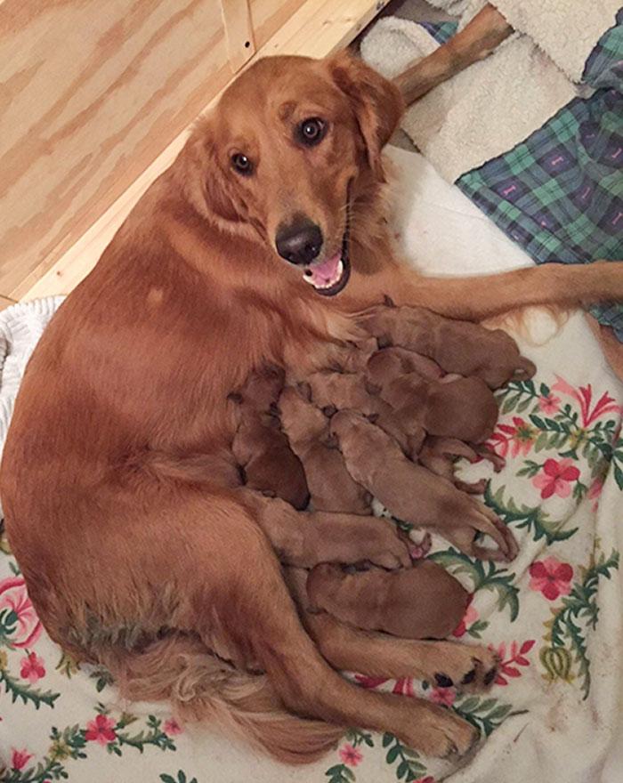 Orgullosa mamá canina de ocho cachorritos pillos