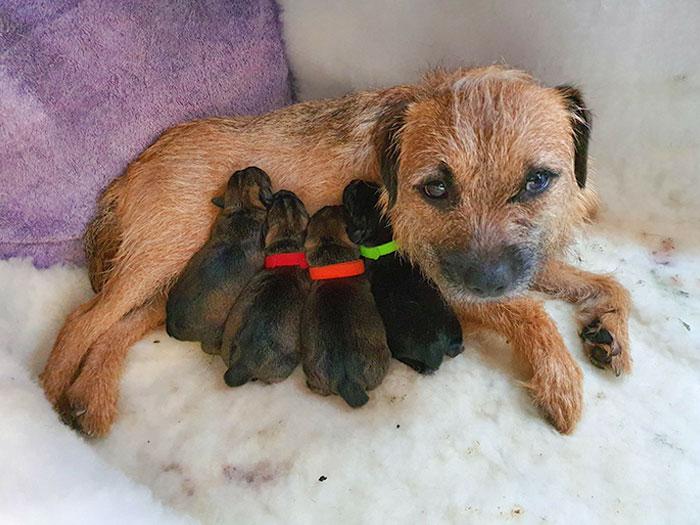 En estos tiempos de pánico, aquí está Chilli Pepper con sus pequeños bebés chillis que nacieron anoche