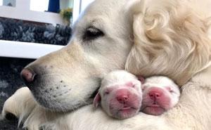 50 Mamás perrunas posando orgullosas con sus cachorros