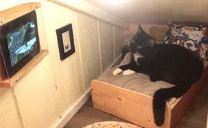 Este hombre transformó un espacio vacío tras la pared en un diminuto dormitorio para su gato, y otros dueños de gatos se mueren de envidia