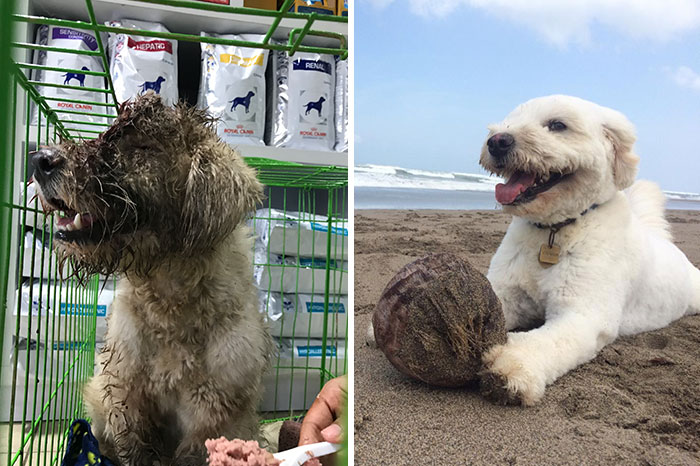 We Found A Dog With A Hole In Her Head, Treated Her, And Found Her A Home