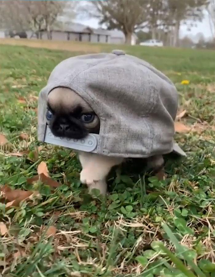 Esa es una tortuga rara