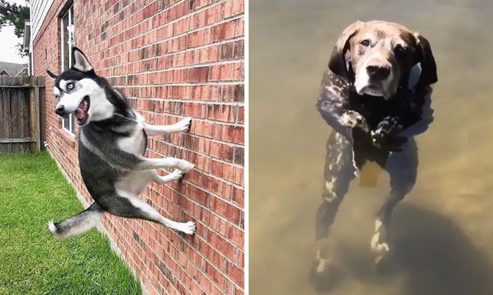 """""""What's Wrong With Your Dog?"""": People Are Posting Pictures Of 'Malfunctioning' Dogs (50 New Pics)"""