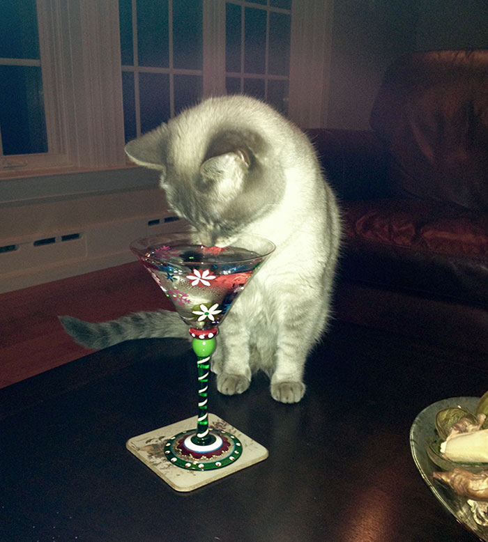 """My Cat Likes To Have A """"Cocktail"""" Whenever I Have A Drink (She Meows Until She Gets It) And She'll Only Drink Out Of This Festive Glass"""
