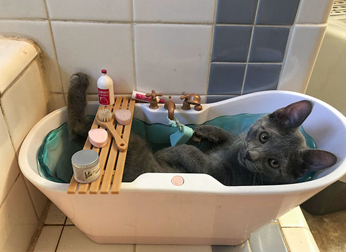 One Of Our Kittens Only Sleeps In My Daughter's Doll Bathtub