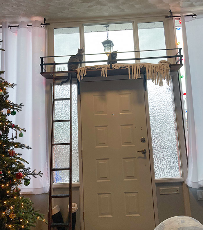Built Our Spoiled Babies A Loft For Christmas