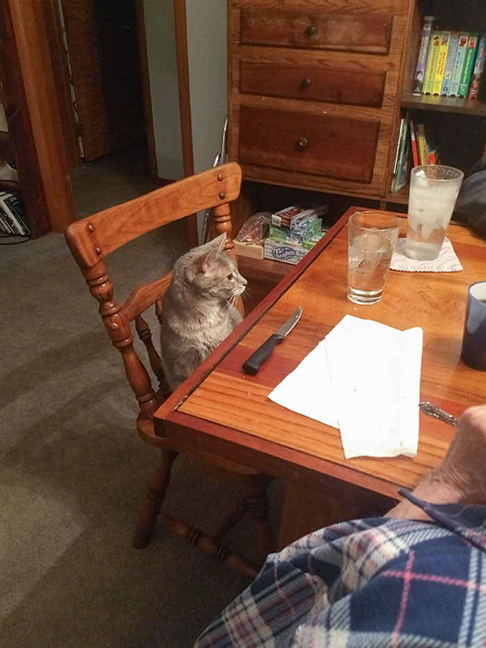 """Grandparents Went From """"We Don't Need A Damn Cat"""" To """"Did You Set Up Lulu's Spot For Dinner?"""""""