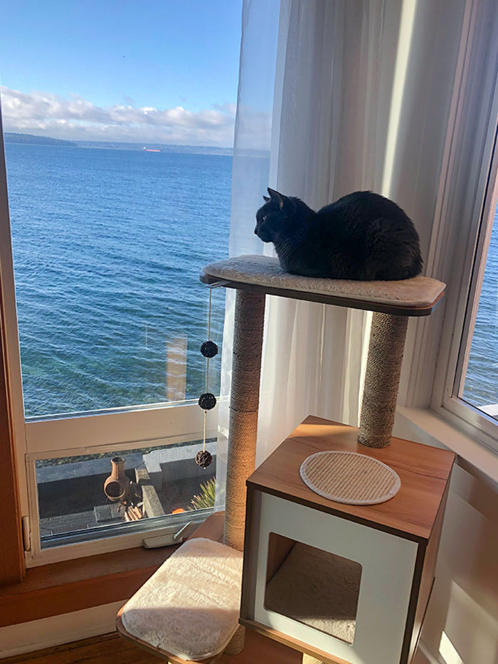 We Have Had Our Indoor Cat For 6 Years, But He Has Never Had Much Windows/Views To Enjoy. We Moved Recently, And He Is Very Satisfied With His New Views