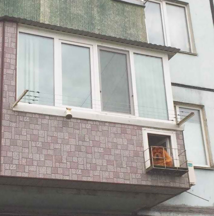 Chow Chow With His Own Balcony