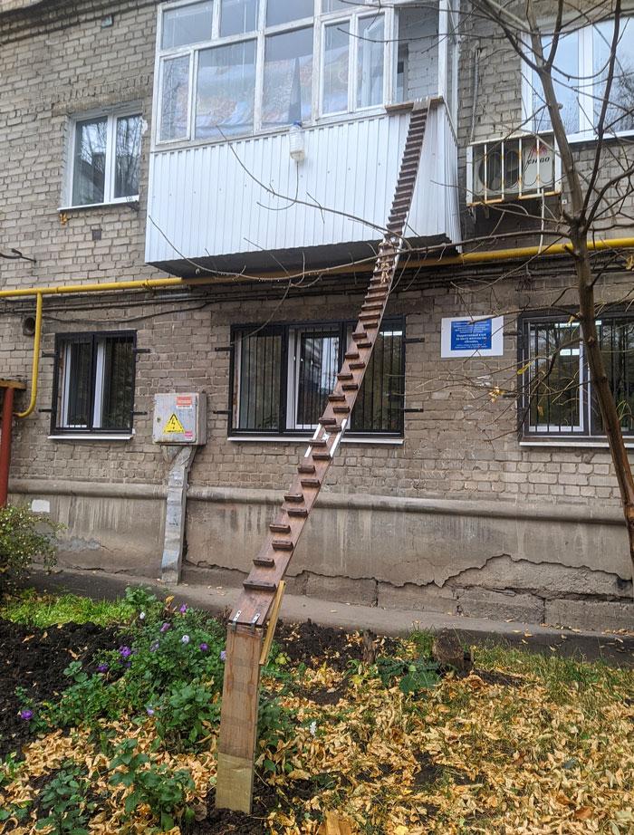 This Cat Ladder