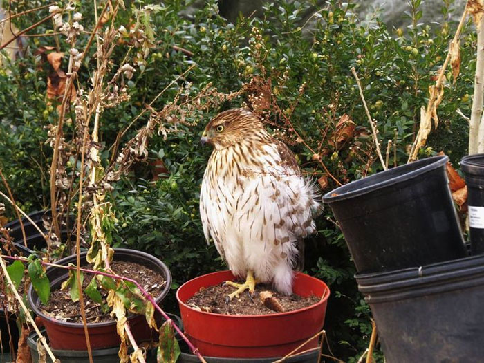 I Planted Some Hawk Seeds Last Fall, I'm Glad One Came Up!