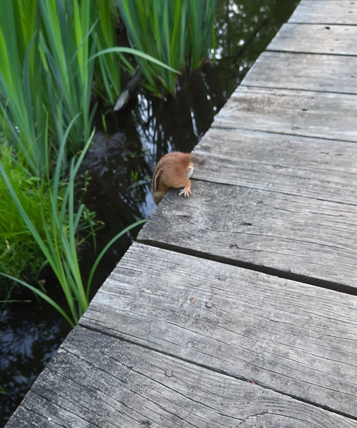 What's Up - Chipmunk Butt!