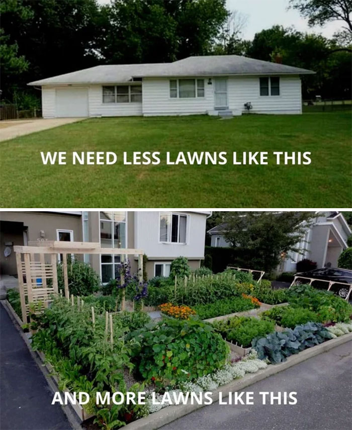 I Want My Lawn To Feed Me Not Vice Versa