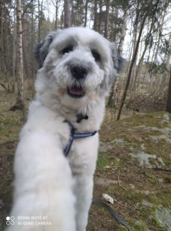 My Pupper Sasha Trying To Paw The Camera. He Is A Big, Fluffy Good Boy Who Always Wants Walks And Snuggles And Can Be Taught -Anything- In Exchange For Some Chicken