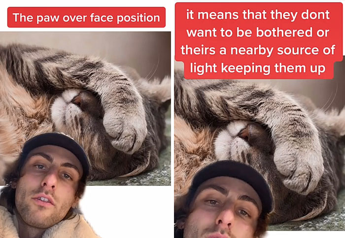 Guy Promises To Give Cat Facts You Didn't Know, Delivers 22 Interesting Ones