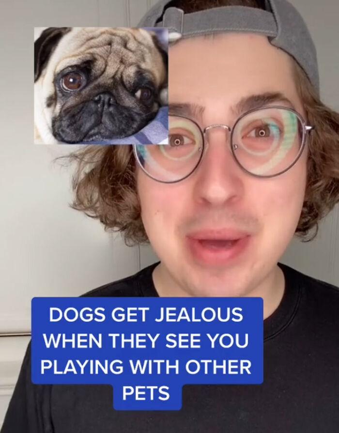10 Amazing Dog Facts