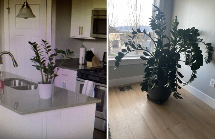 My First-Ever House Plant Just Turned 5