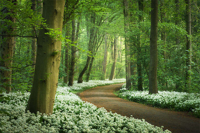 Spring In The Netherlands Is Magical, Here Are My 30 Photos To Prove It