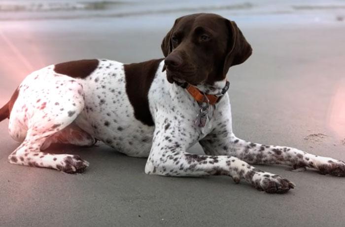 stolen puppy captured dognapper juliana mazza 2 609cc775d47c1 700