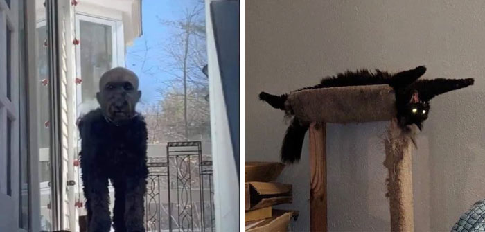 50 Times Pets Almost Gave Their Owner A Heart Attack By How Terrifying They Looked