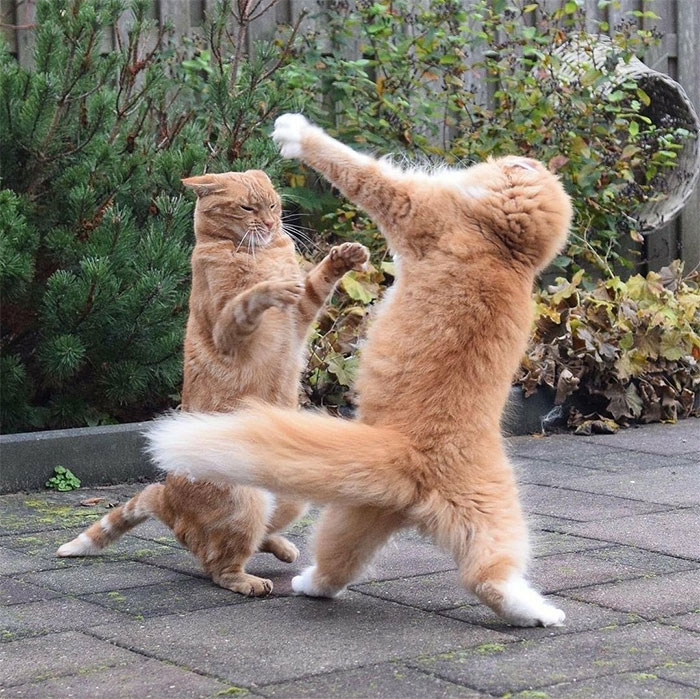 Everybody Is Kung Fu Fighting, These Cats Are Fast As Lightning