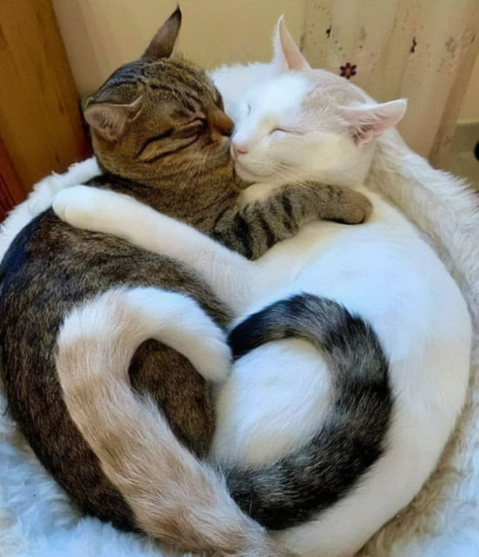 Two Cats, One Heart