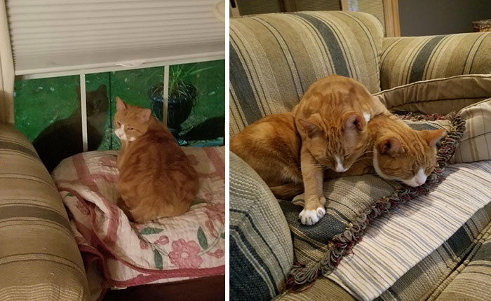 I Rescued A Stray Cat In My Neighborhood. At Night His Brother Would Come To Visit Him. I Really Had No Other Options