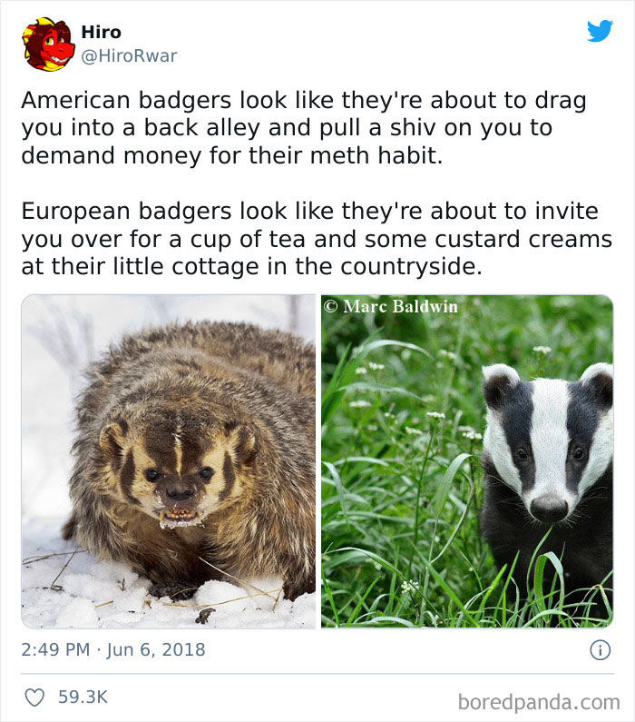 The Different Types Of Badgers